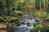 Forest Stream Wall Mural 278 by Ideal Decor