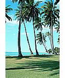 Palm View Ocean Wall Murals