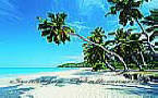 Palm Paradise PR1819 Tropical Wallpaper Mural