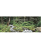 Woodland Stream wall murals