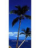 Palm Tree 2-1028 Ocean Wall Murals