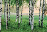Nordic Forest Wall Mural by Ideal Decor 290