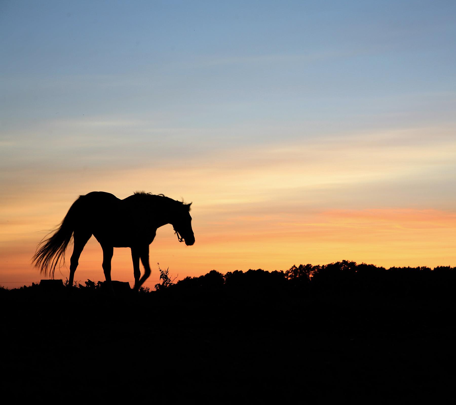 Beautiful Wallpaper Horse Sunrise - 99455  Pic_834065.jpg
