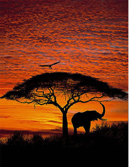 african sunset 4 501 wall mural by komar ForAfrican Sunset Wall Mural