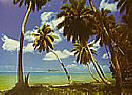 Tahiti 4036 Large tropical Wall murals