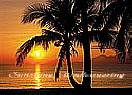 Palm Beach Sunrise Large tropical Wall Murals