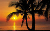 Palmy Beach Sunrise Wall Mural 8-255 by Komar
