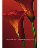 Red Calla Lilies 406 discount wall murals