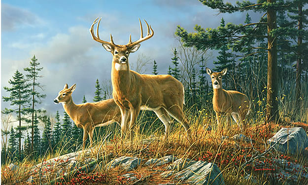Autumn whitetail wall mural c858 by environmental graphics for Environmental graphics giant world map wall mural