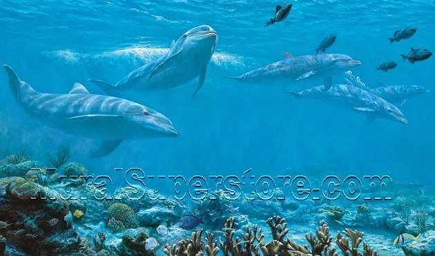 Dolphin wall mural mp4959m for Dolphin wall mural