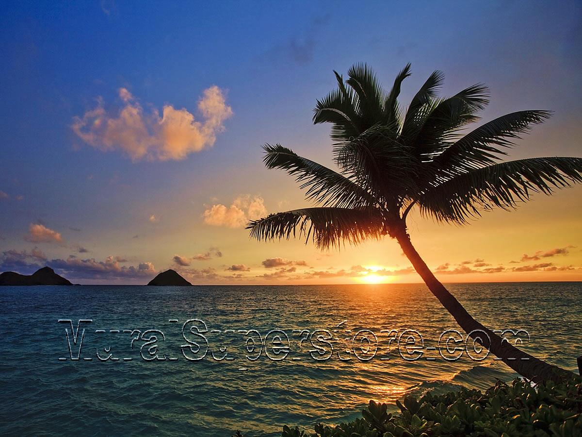 Tahiti Sunset Wall Mural