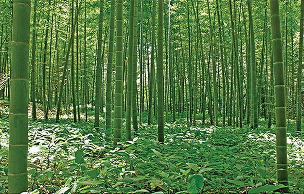 Bamboo forest wall mural umb91133 by blonder for Bamboo forest wall mural