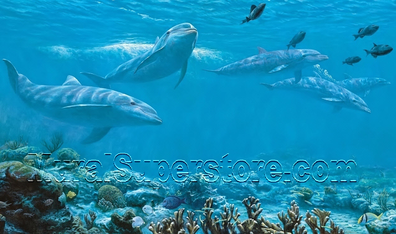 dolphin wall mural mp4958m by yo