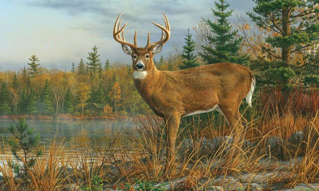 Fall morning buck wall mural c925 by environmental graphics for Environmental graphics giant world map wall mural