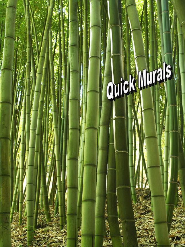 Bamboo grove wall mural for Bamboo mural walls