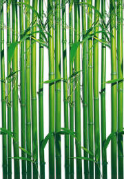 Bamboo Wall Mural 421 by Ideal Decor