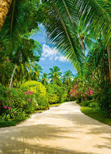 Tropical Pathway DM438 Wall Mural