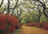 Red Flower Path Through Woods Mural 8069