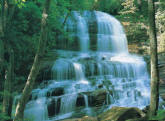 Pearsons Falls Wall Mural DS8080