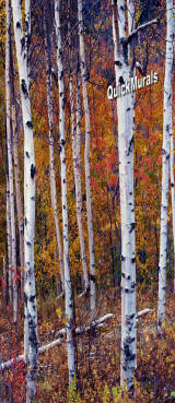 Autumn Birch 1-Piece Canvas Peel & Stick Wall/Door Mural