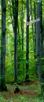 Majestic Forest 1-Piece Canvas Peel & Stick Wall/Door Mural