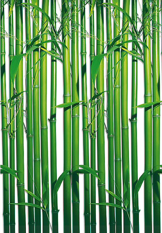 Bamboo wall mural 421 by ideal decor for Bamboo wall mural wallpaper