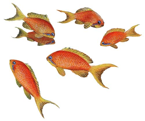 Walls of the Wild Peel & Stick Appliqué Goldfish