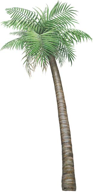 Walls of the Wild Peel & Stick Appliqué Palm Tree small