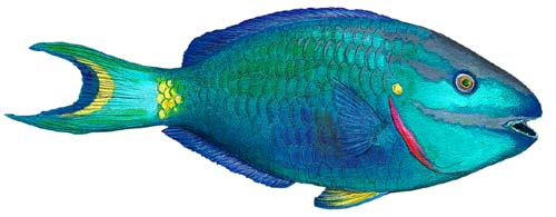 Walls of the Wild Peel & Stick Appliqué Parrotfish