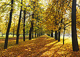 Autumn Park  Peel and Stick Wall Murals