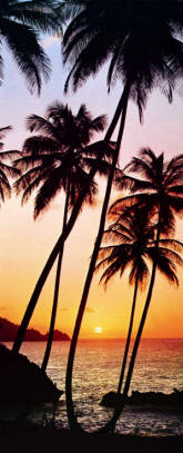 Sunny Palms 529 Tropical Wall Mural