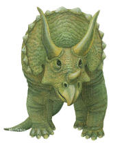 Walls of the Wild Triceratops